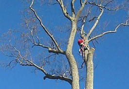 Tree Service in Westchester County NY
